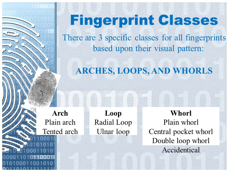 ARCHES, LOOPS, AND WHORLS