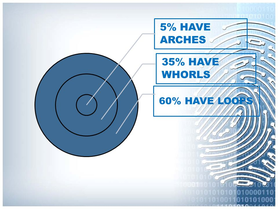 5% HAVE ARCHES 35% HAVE WHORLS 60% HAVE LOOPS