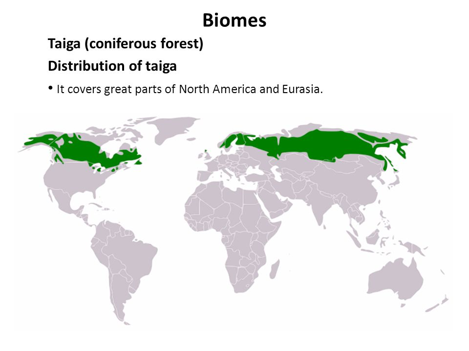Biomes Taiga (coniferous forest) Distribution of taiga