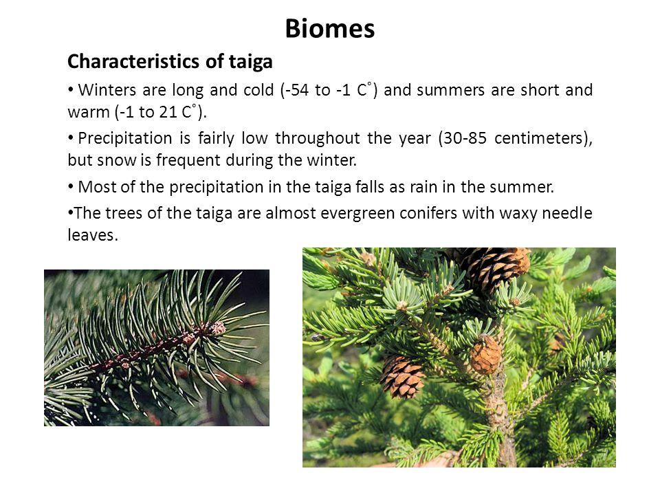 Biomes Characteristics of taiga