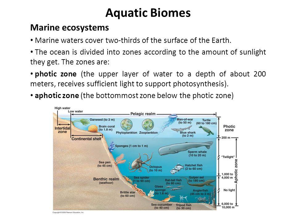 Aquatic Biomes Marine ecosystems