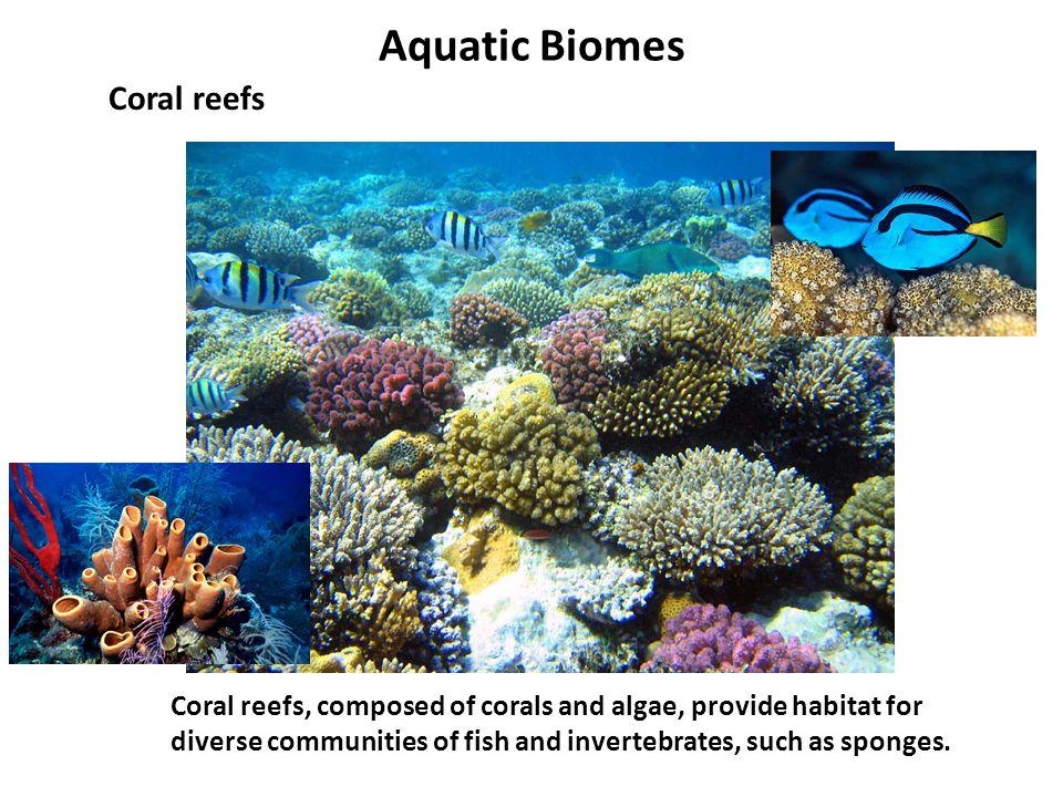 Aquatic Biomes Coral reefs