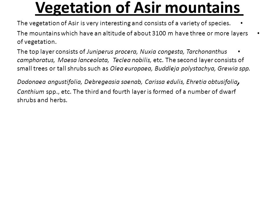Vegetation of Asir mountains