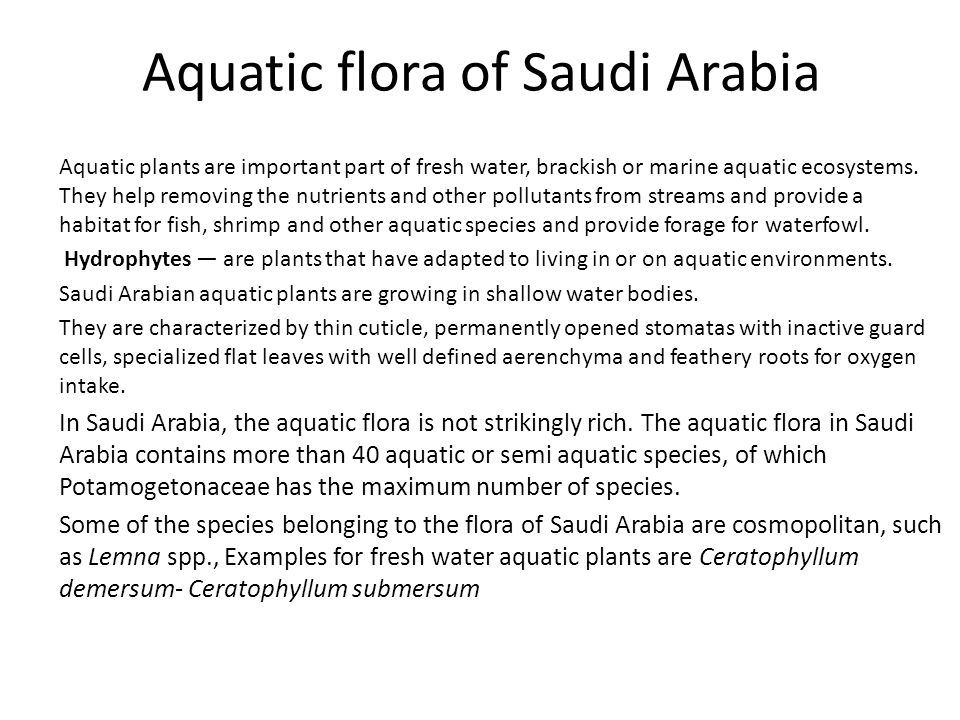 Aquatic flora of Saudi Arabia