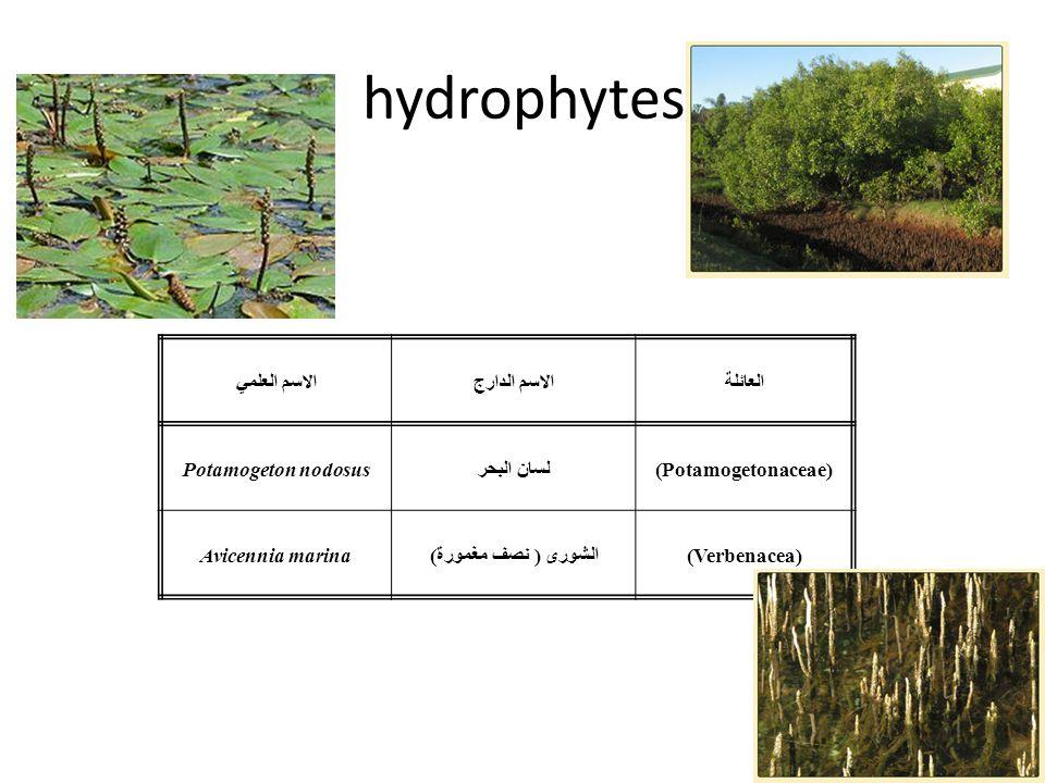 hydrophytes العائلة الاسم الدارج الاسم العلمي (Potamogetonaceae)