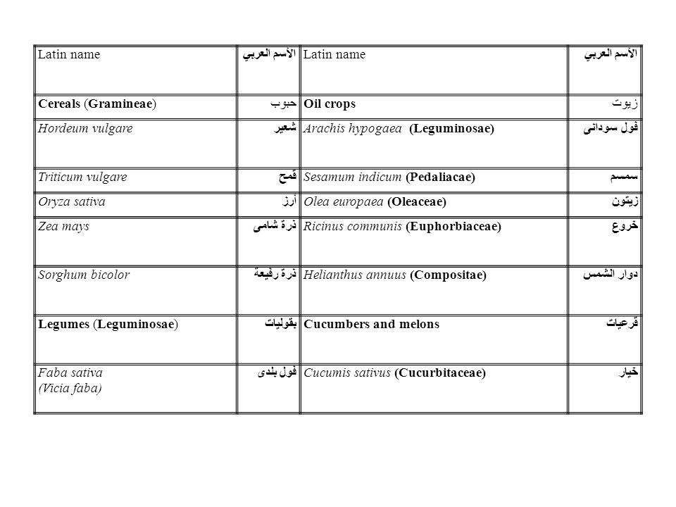 Latin name الأسم العربي. Cereals (Gramineae) حبوب. Oil crops. زيوت. Hordeum vulgare. شعير. Arachis hypogaea (Leguminosae)