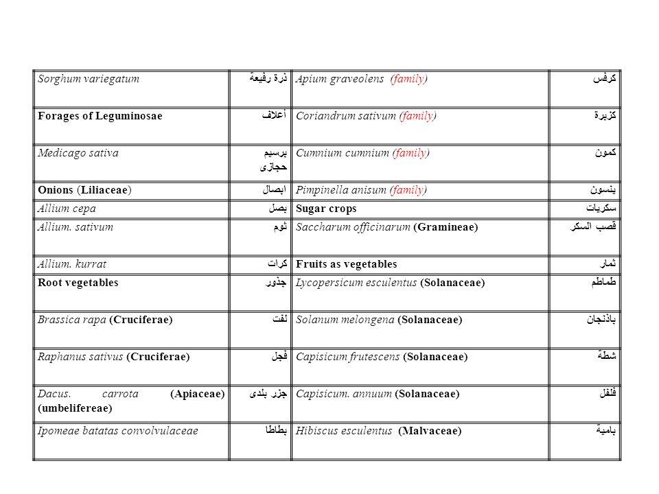 Sorghum variegatum ذرة رفيعة. Apium graveolens (family) كرفس. Forages of Leguminosae. أعلاف. Coriandrum sativum (family)