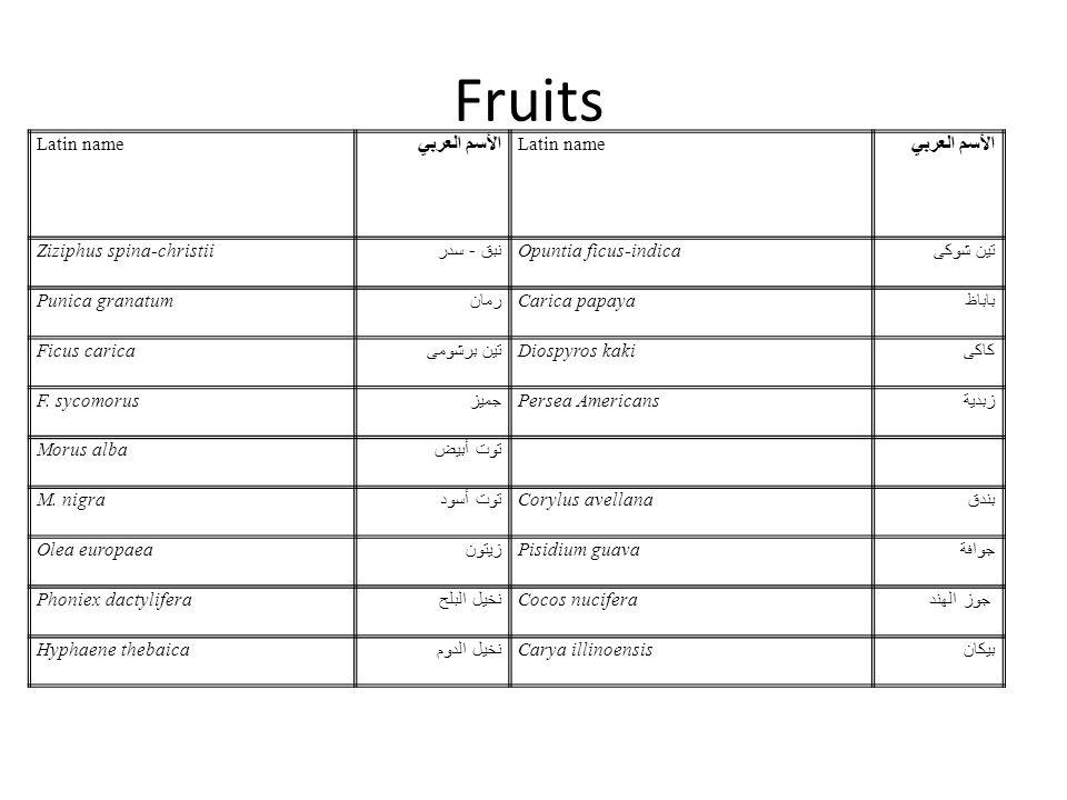 Fruits الأسم العربي Latin name Ziziphus spina-christii نبق - سدر