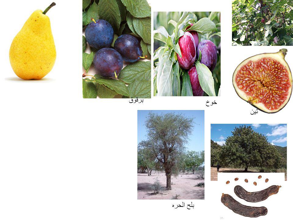 برقوق خوخ تين بلح الحره