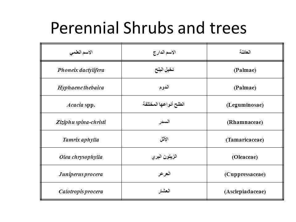 Perennial Shrubs and trees