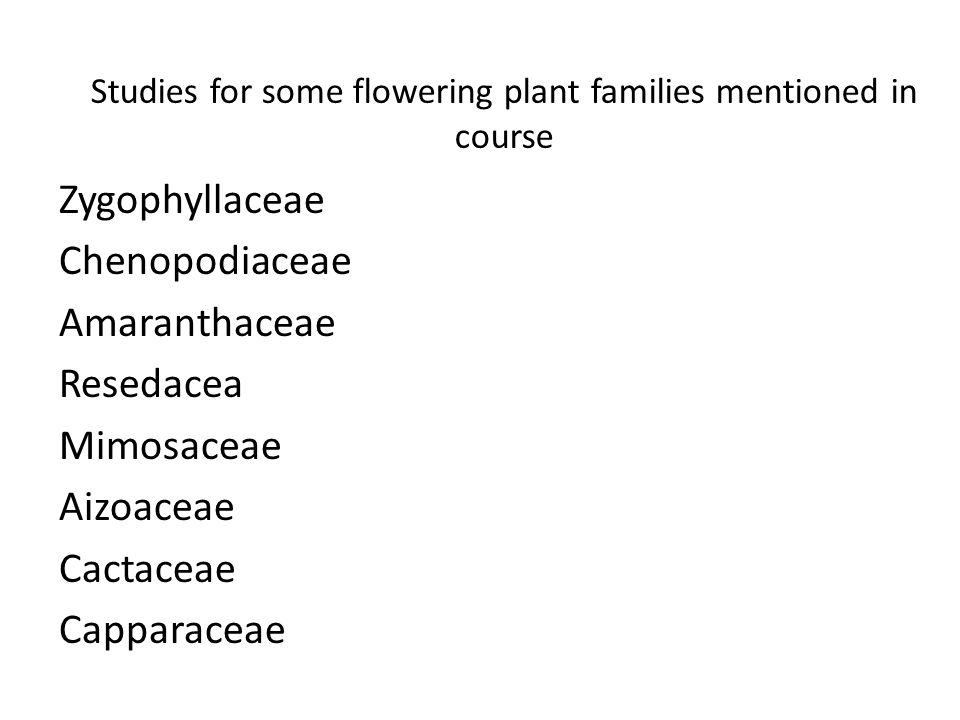 Studies for some flowering plant families mentioned in course