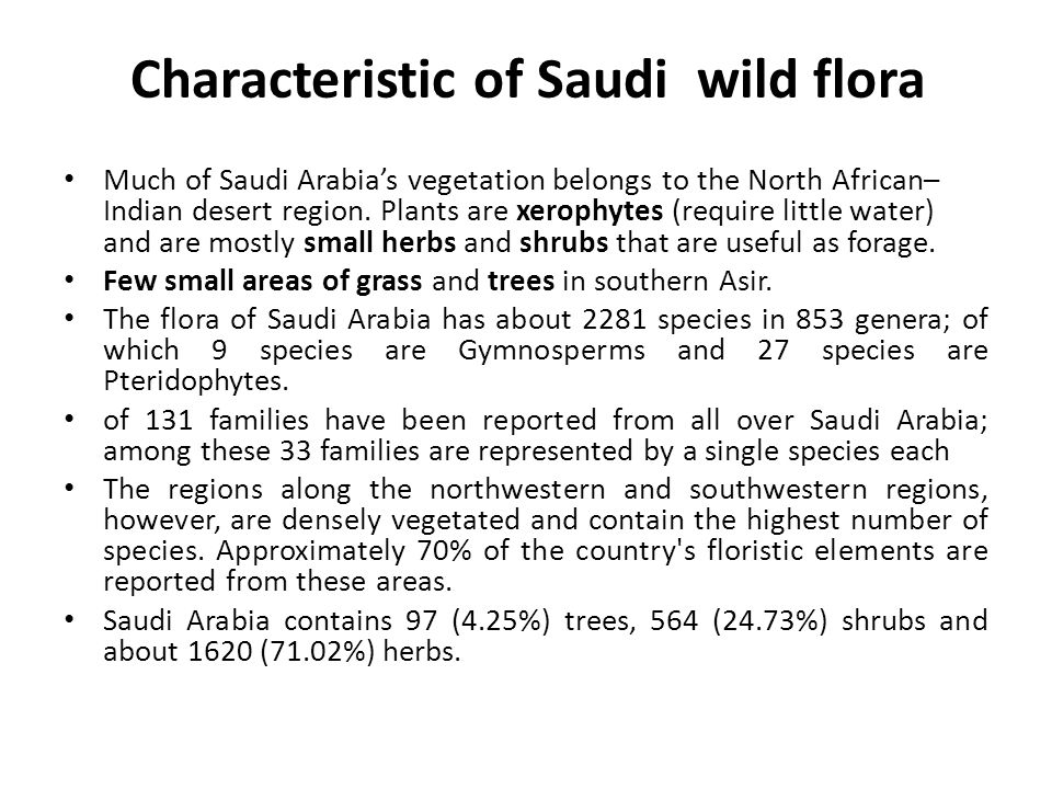 Characteristic of Saudi wild flora