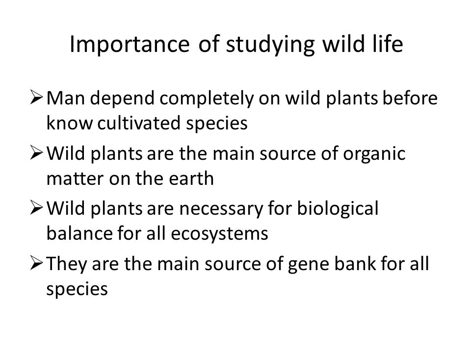 Importance of studying wild life