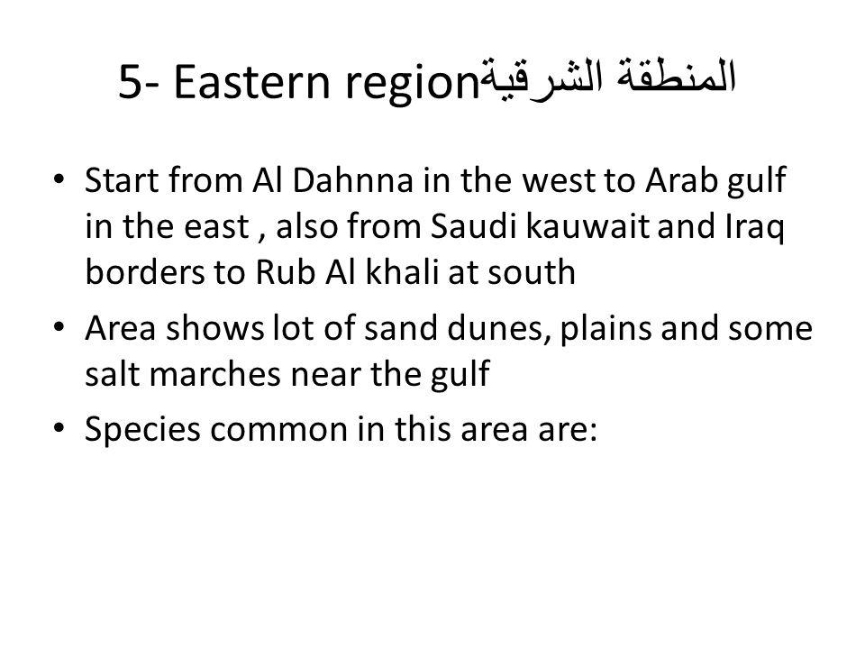 المنطقة الشرقية5- Eastern region
