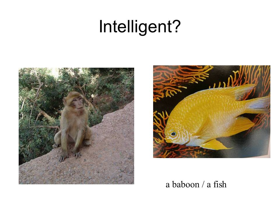 Intelligent a baboon / a fish