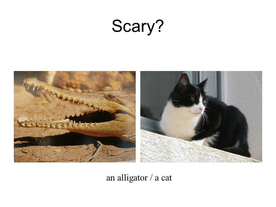 Scary an alligator / a cat