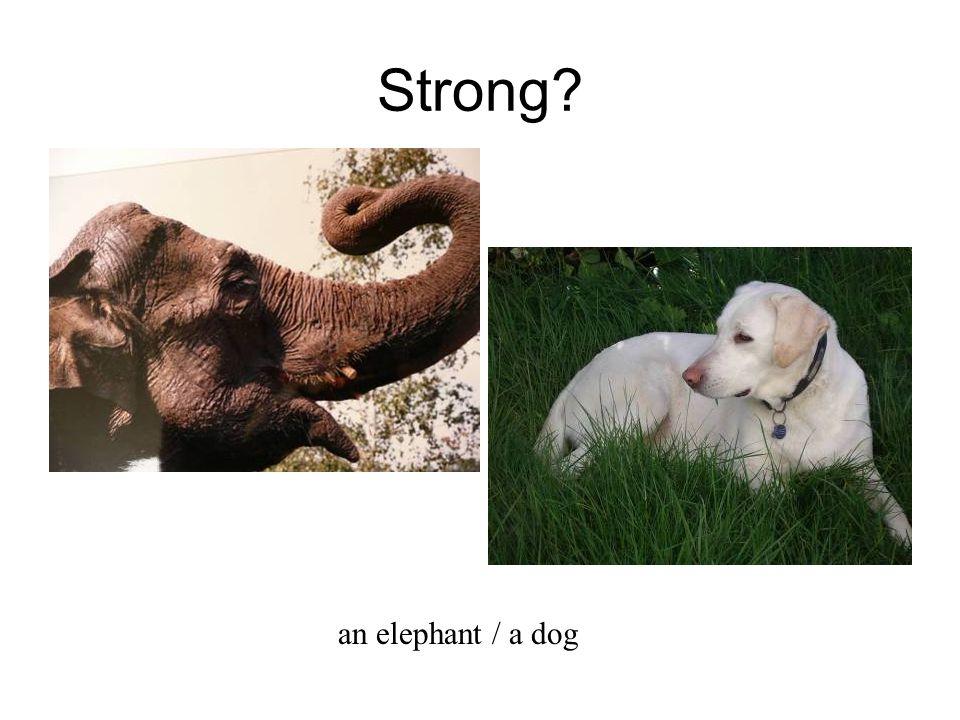 Strong an elephant / a dog
