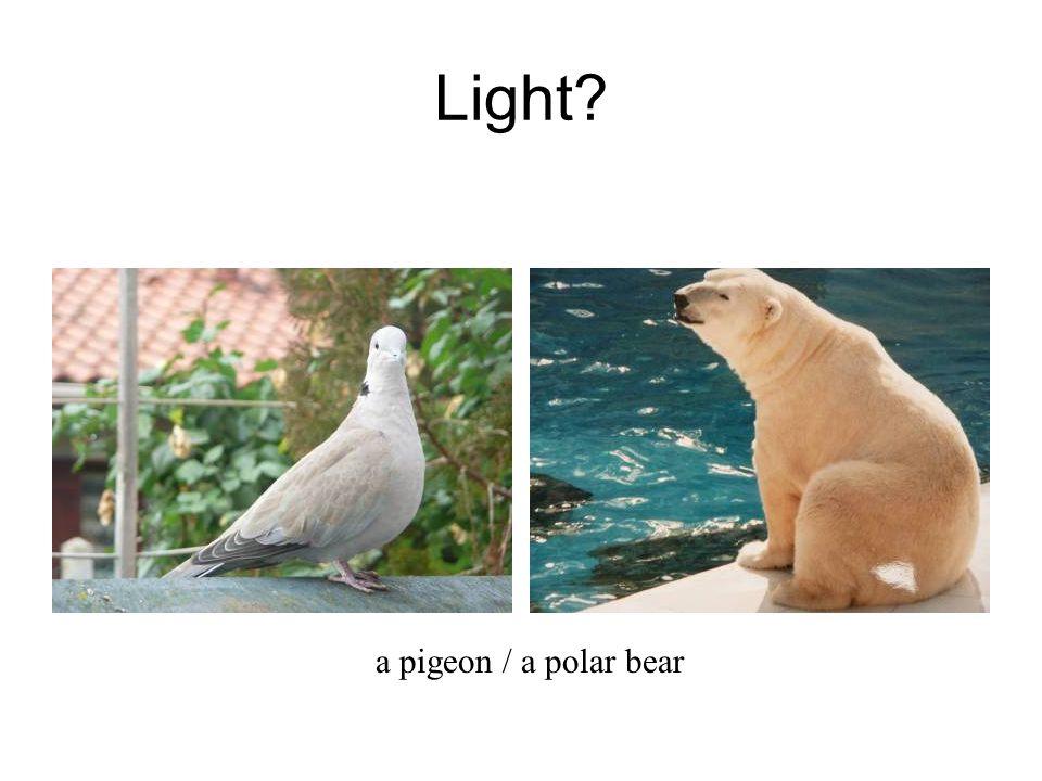 Light a pigeon / a polar bear