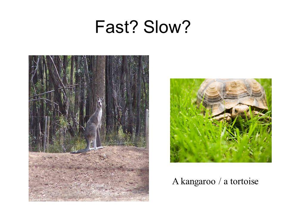 Fast Slow A kangaroo / a tortoise
