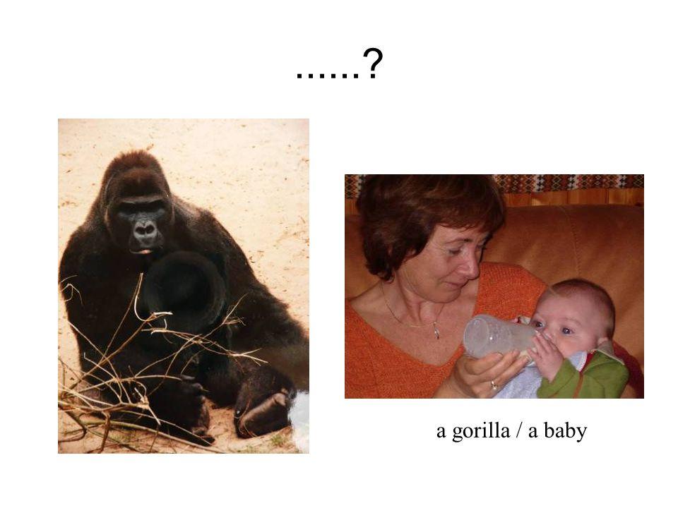 ...... a gorilla / a baby