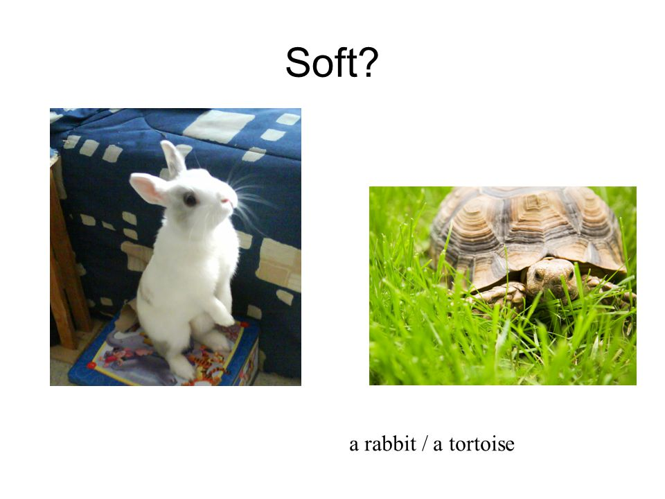 Soft a rabbit / a tortoise