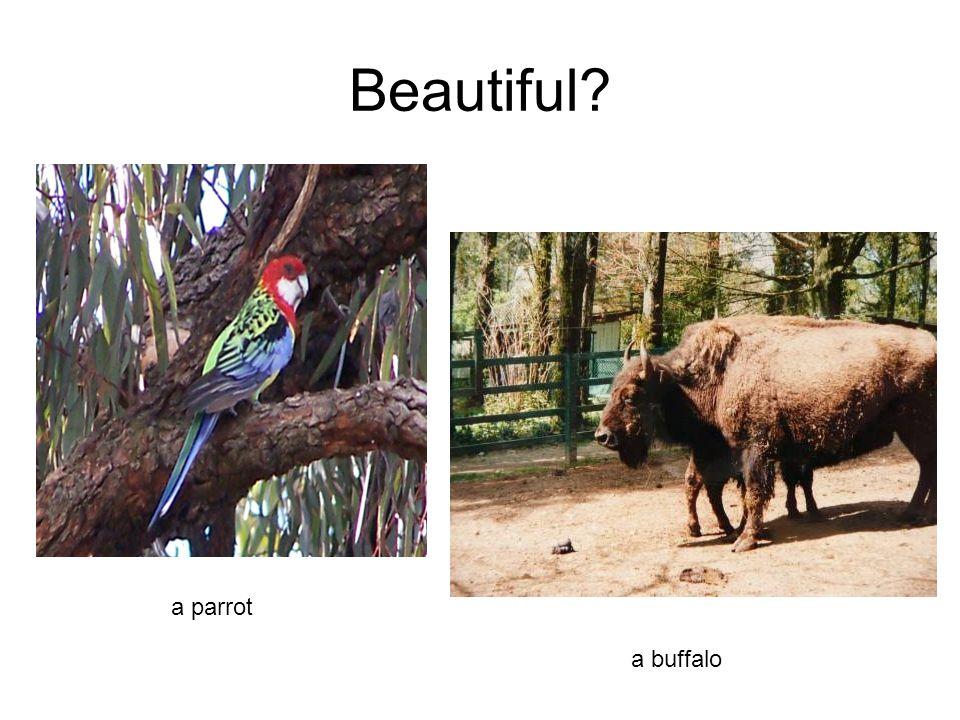 Beautiful a parrot a buffalo