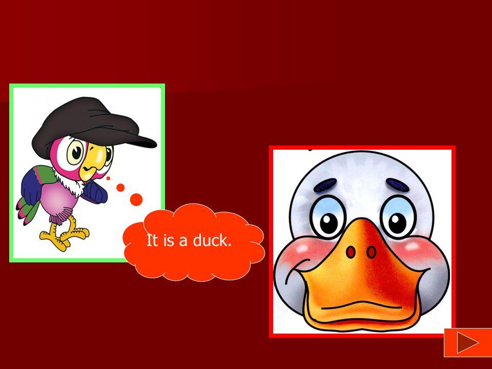 It is a duck.