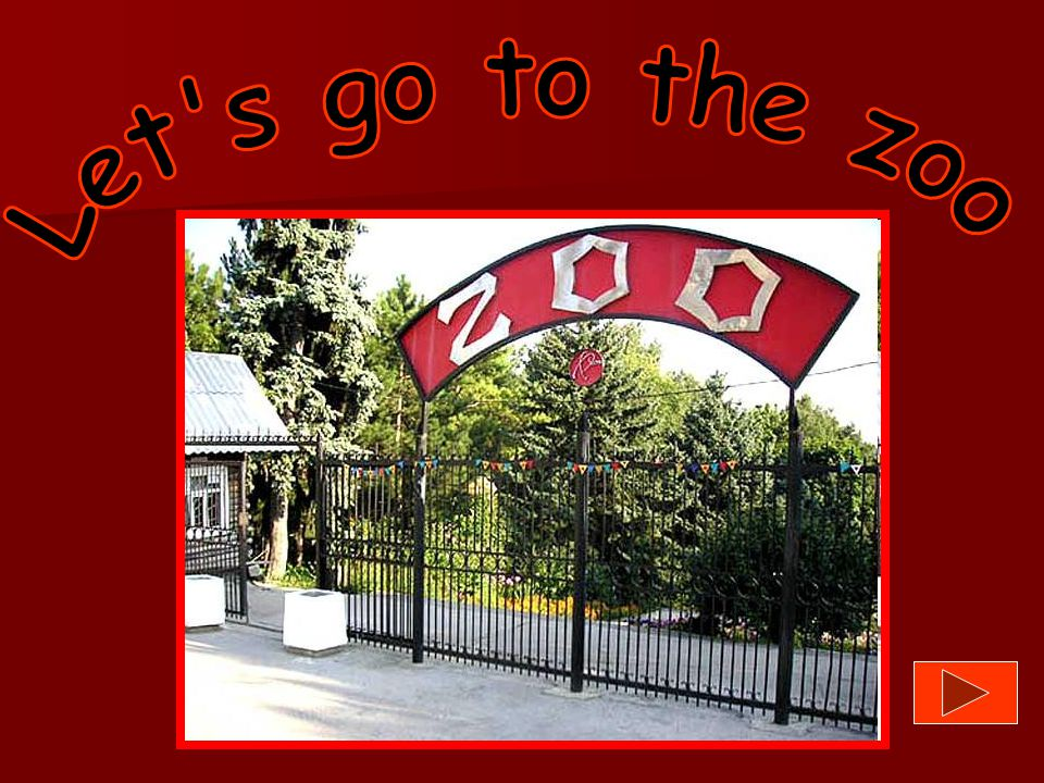 Let s go to the zoo