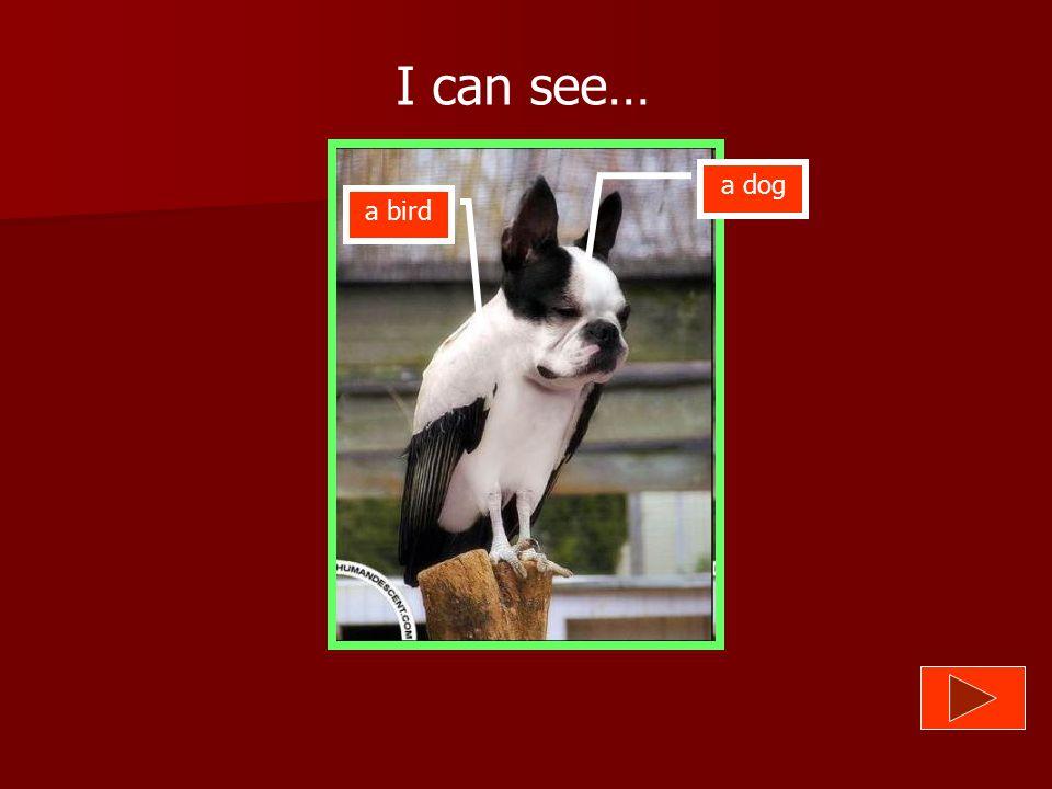 I can see… a dog a bird