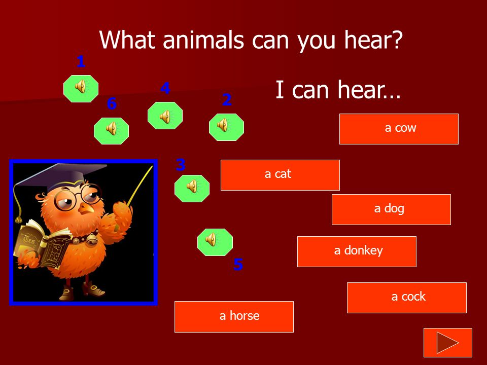 What animals can you hear