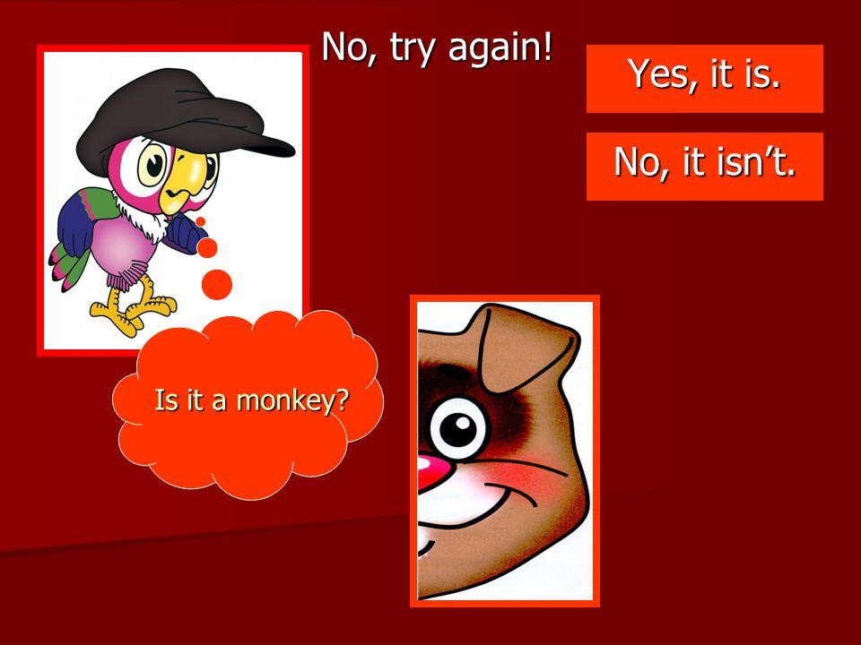 No, try again! Yes, it is. No, it isn't. Is it a monkey