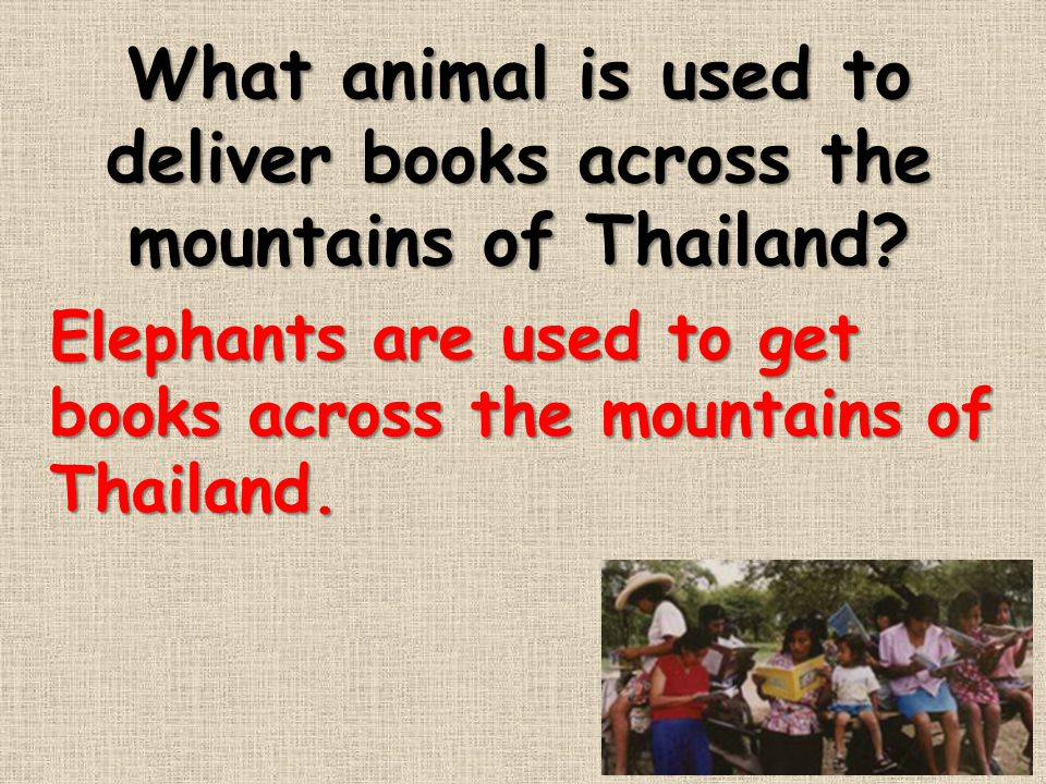 What animal is used to deliver books across the mountains of Thailand