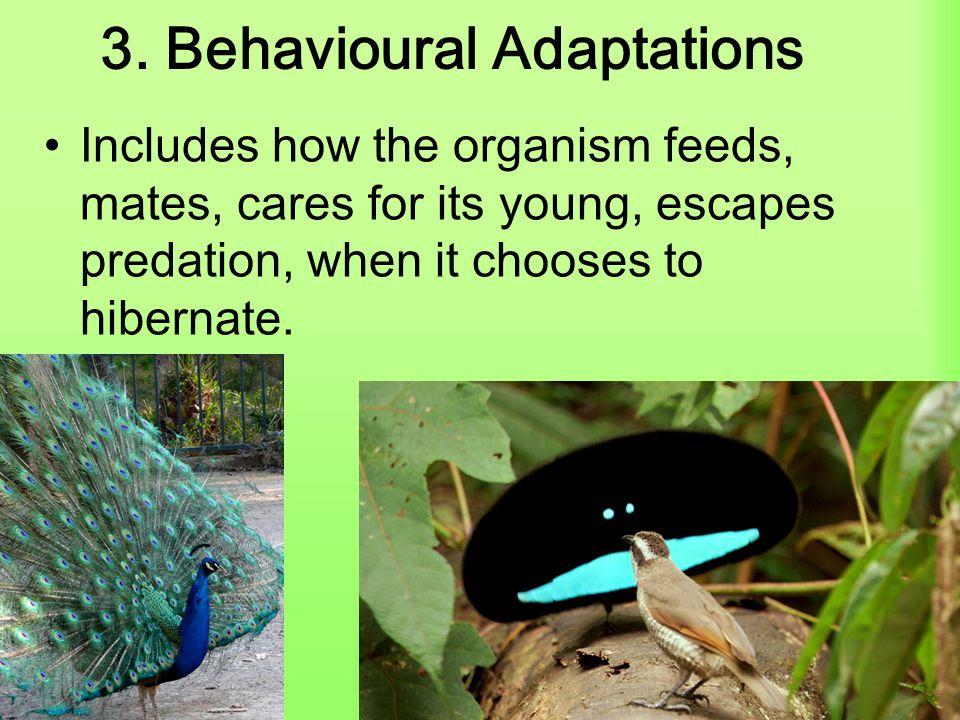 3. Behavioural Adaptations