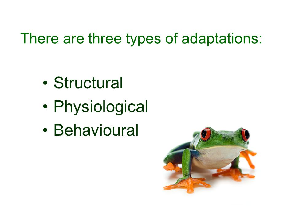 There are three types of adaptations: