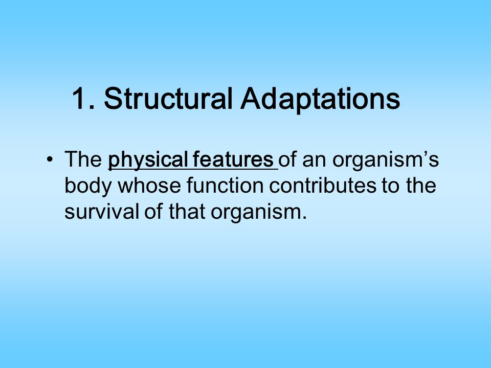 1. Structural Adaptations