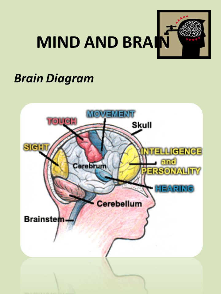 MIND AND BRAIN Brain Diagram