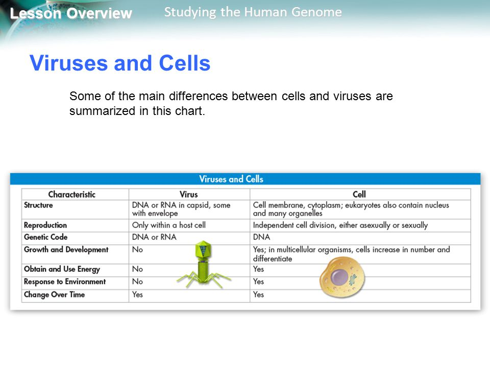 Viruses and Cells Some of the main differences between cells and viruses are summarized in this chart.