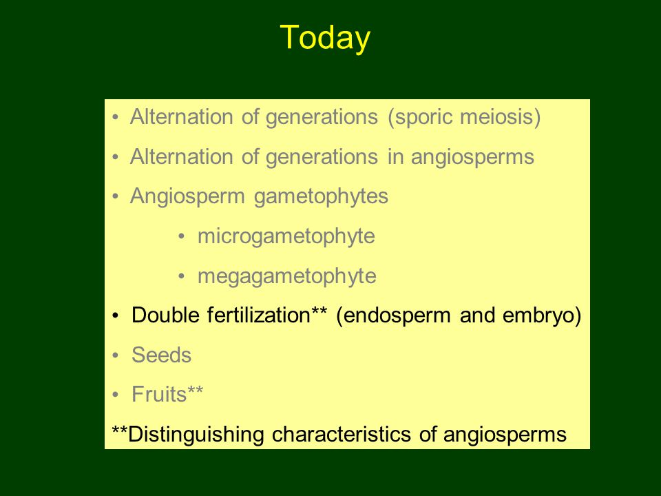Today Alternation of generations (sporic meiosis)