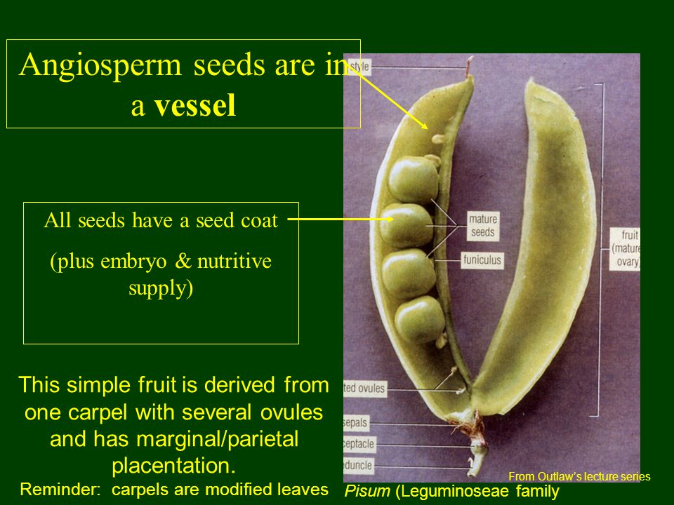 Angiosperm seeds are in a vessel