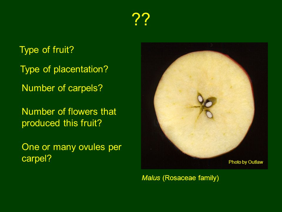 Type of fruit Type of placentation Number of carpels