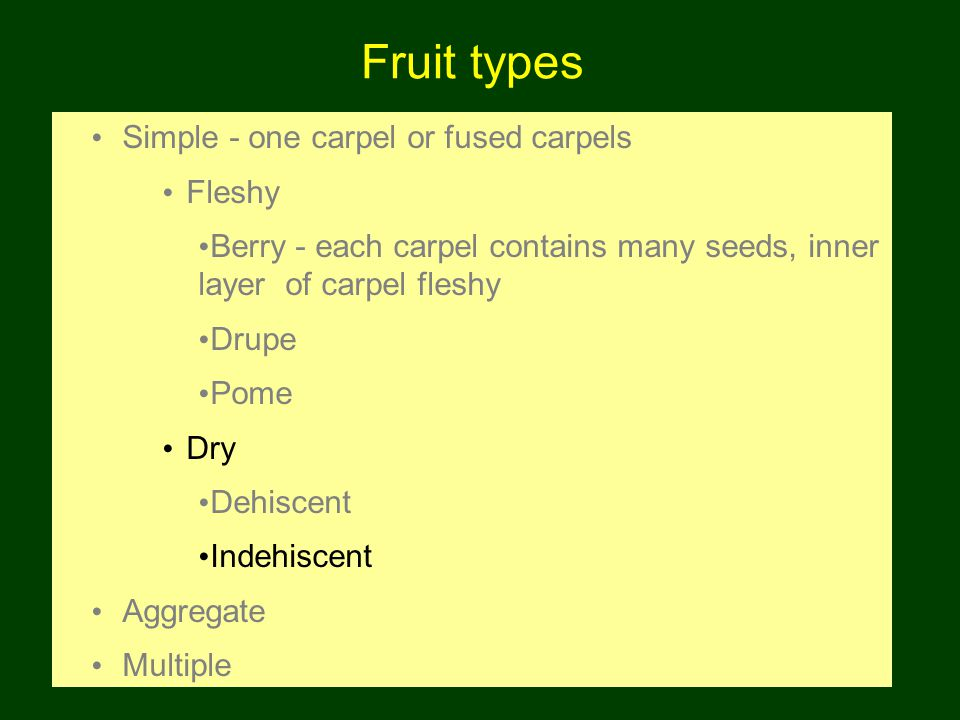 Fruit types Simple - one carpel or fused carpels Fleshy