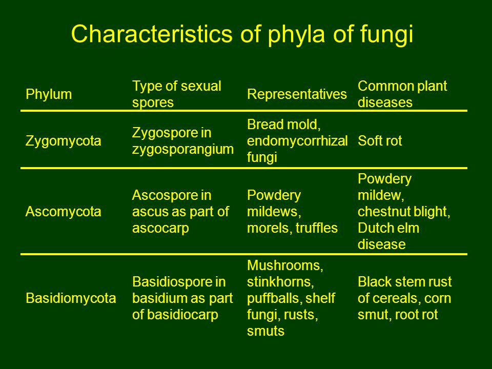 Characteristics of phyla of fungi