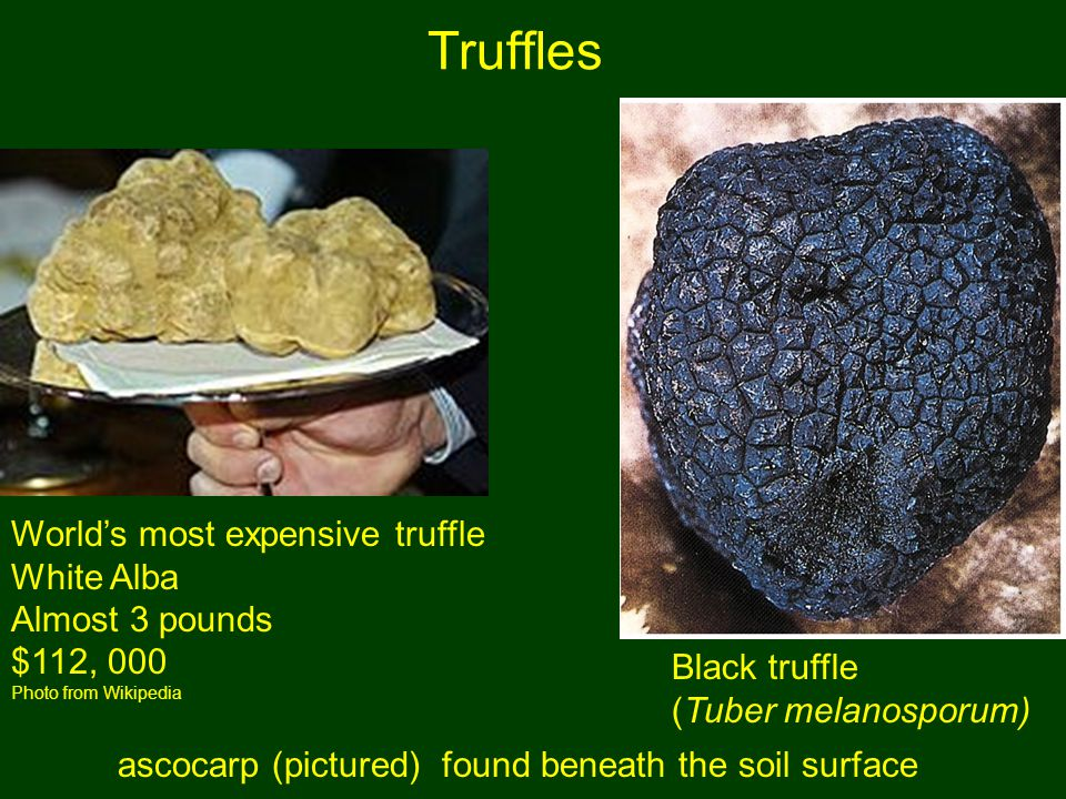 Truffles World's most expensive truffle White Alba Almost 3 pounds