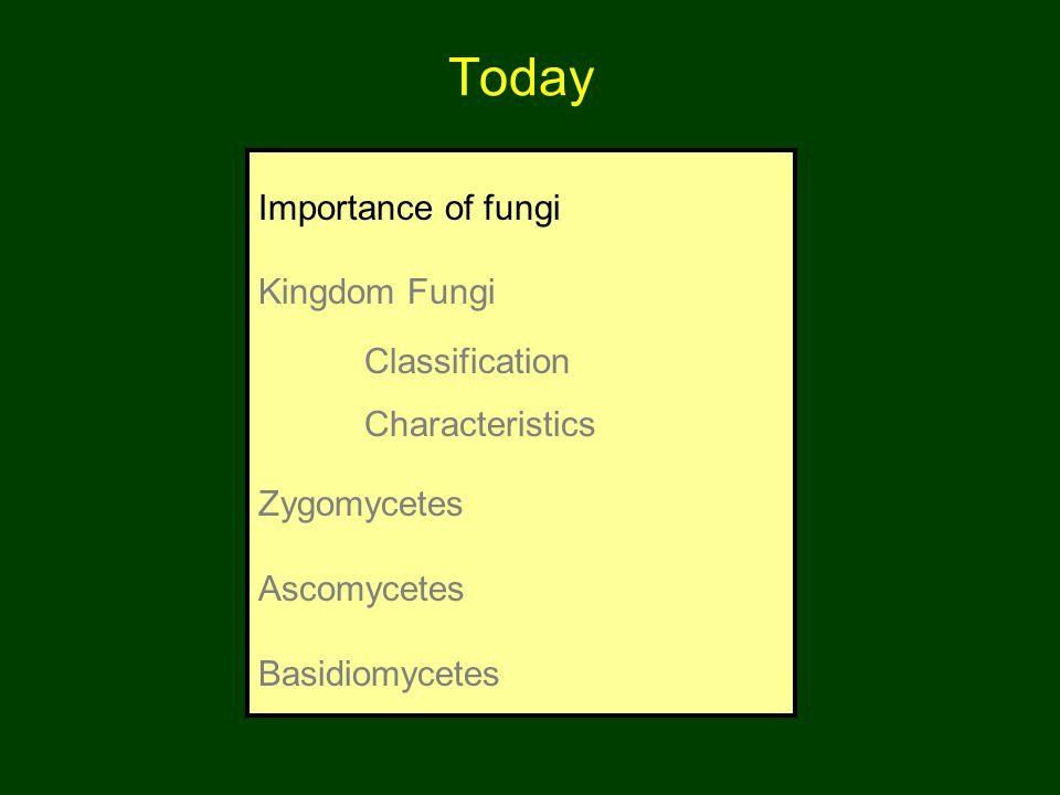 Today Importance of fungi Kingdom Fungi Classification Characteristics