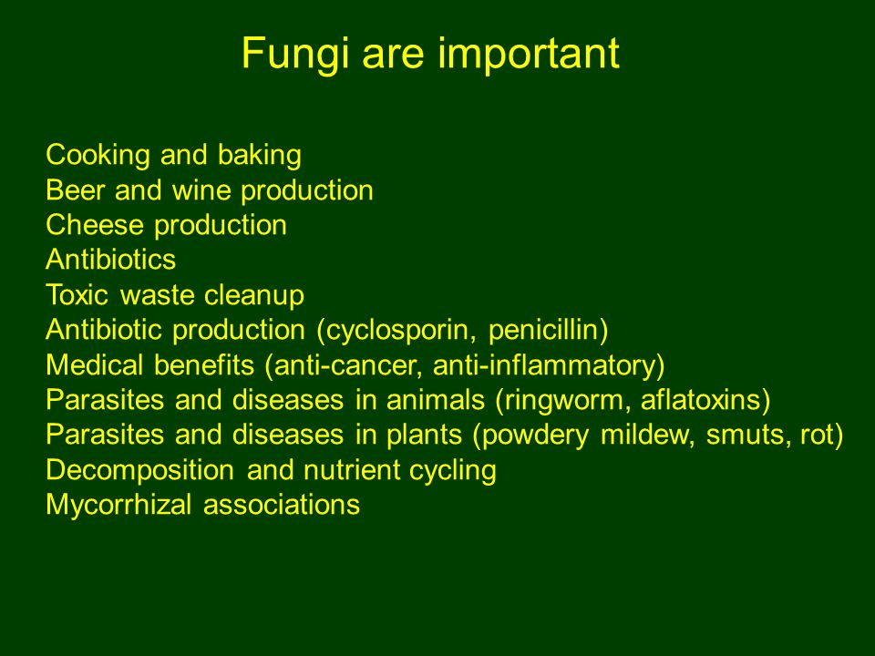 Fungi are important Cooking and baking Beer and wine production