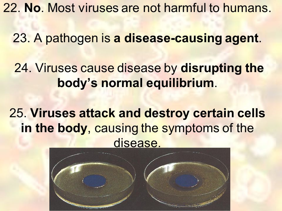 22. No. Most viruses are not harmful to humans. 23