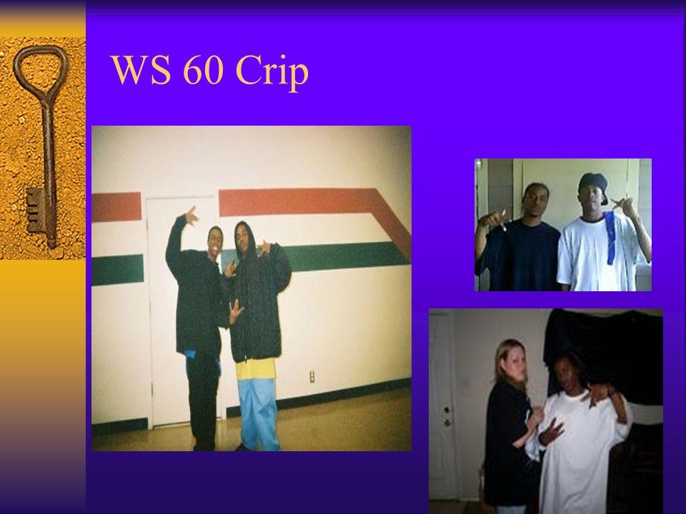 WS 60 Crip