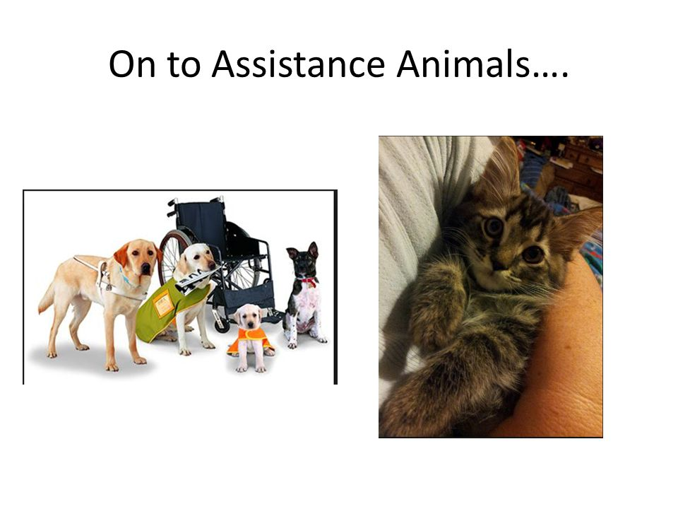 On to Assistance Animals….
