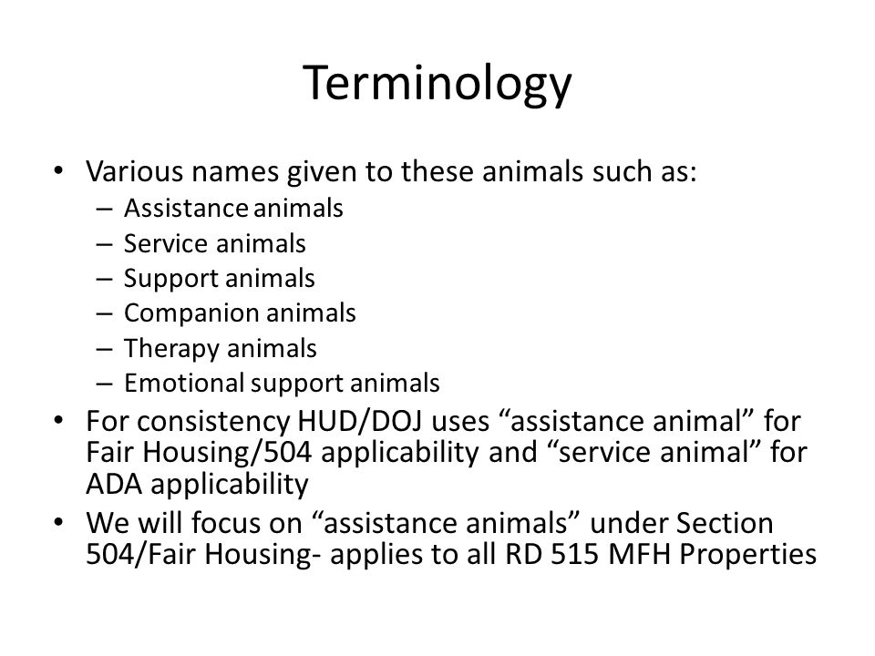 Terminology Various names given to these animals such as: