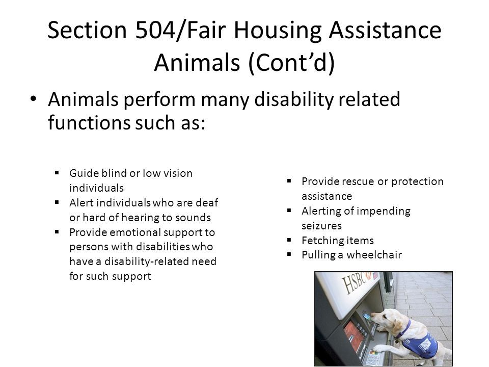 Section 504/Fair Housing Assistance Animals (Cont'd)
